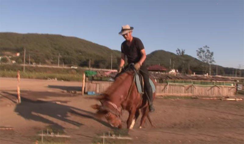 caballo finge estar muerto para que no lo monten