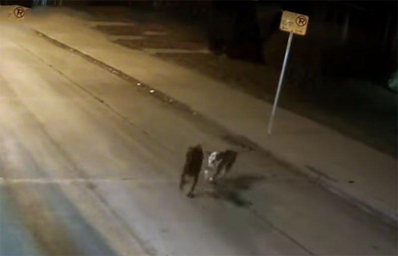 Conductora de autobús observó a dos perritos en el camino.