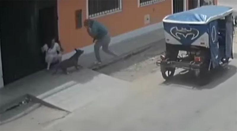 La valentía del perrito hizo que el ladrón huyera del lugar.